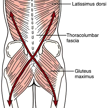 Its All About The Glutes Open Health Clinic