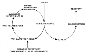 The Pain Cycle is important in cases of low back pain